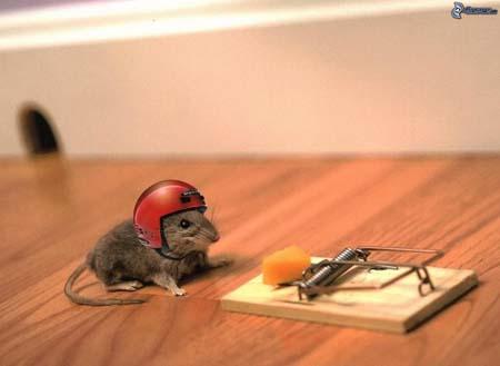 Las mejores trampas para ratas que funcionan