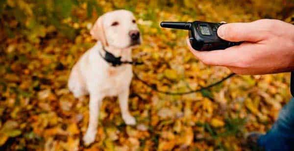 Los 4 Mejores Collares de Adiestramiento Para Perros de 2021